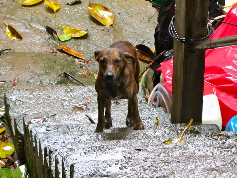 A dog lost in the Rocinha Favela