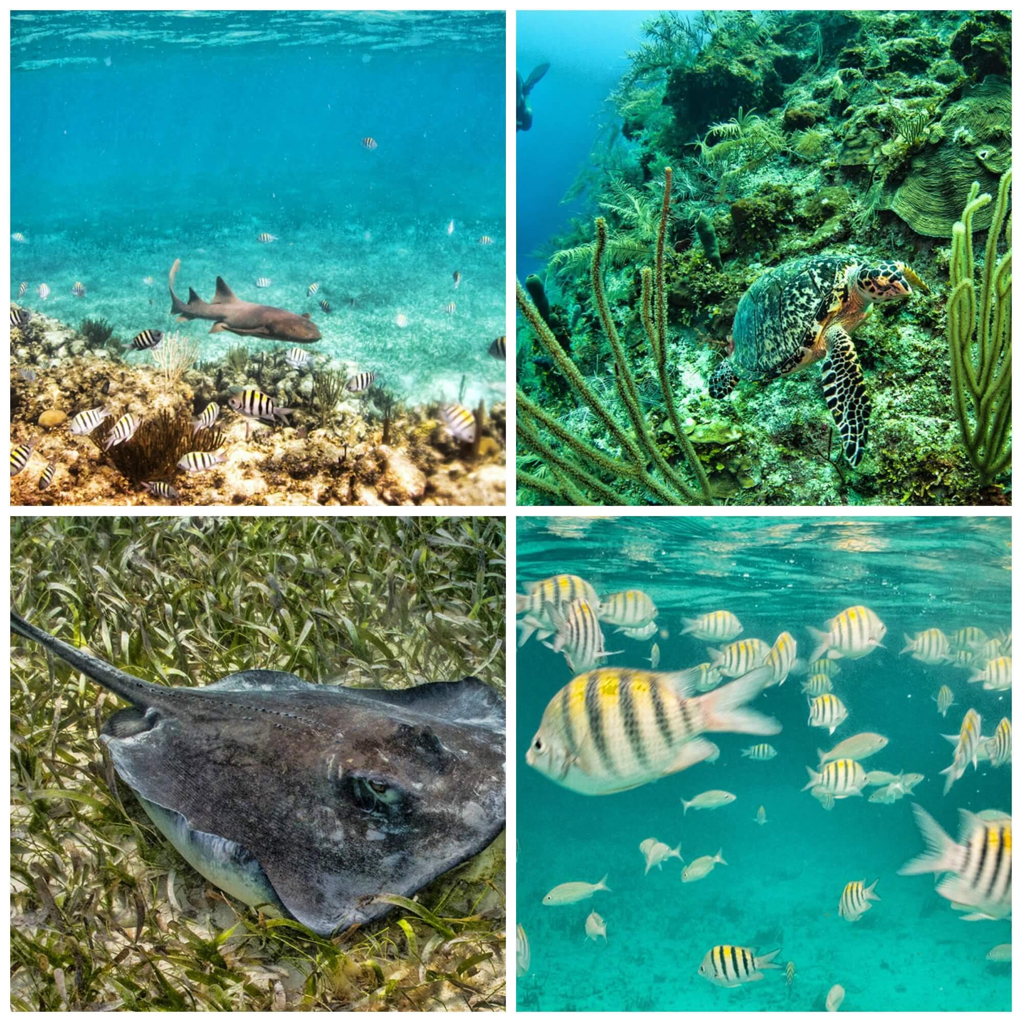 Belize Wonders