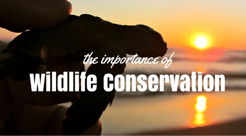 The Importance of wildlife conservation