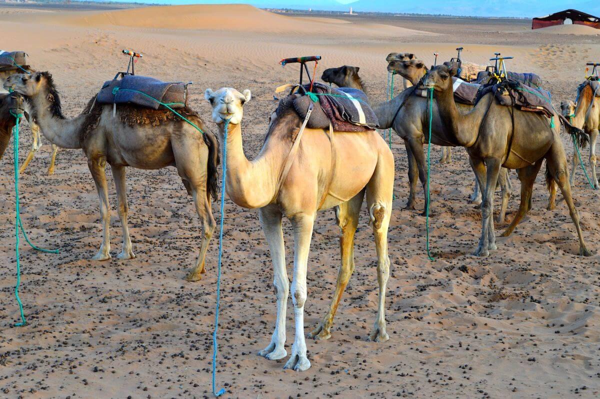 Misadventures at the Sahara Desert