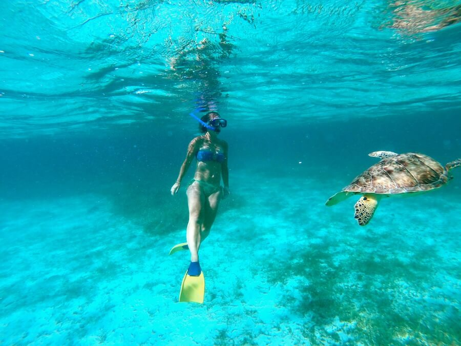 Snorkeling with sea turtles in Belize