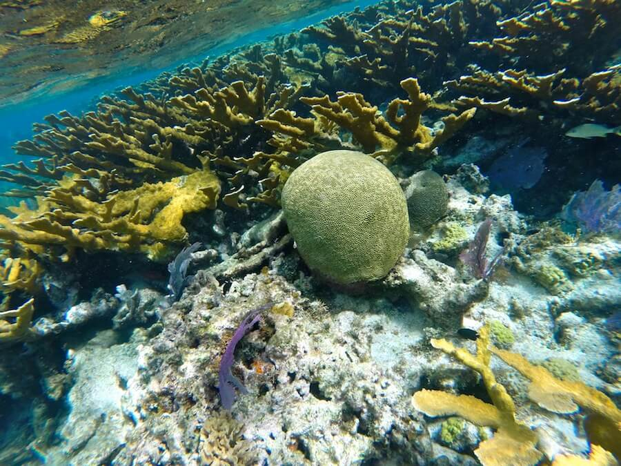 The Coral Reef of Belize