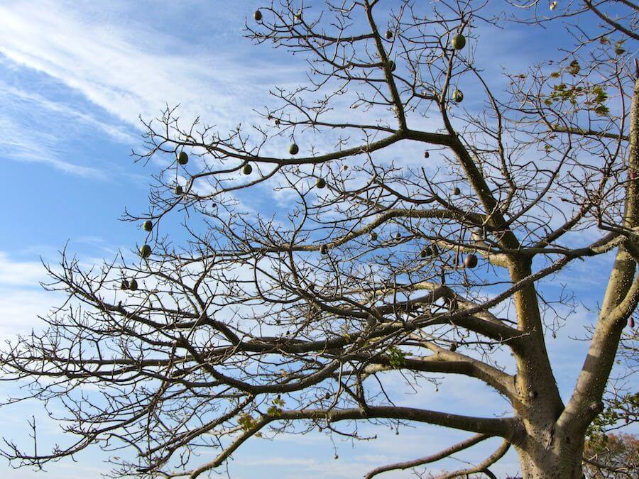 Trees at Colonia de Sacramento
