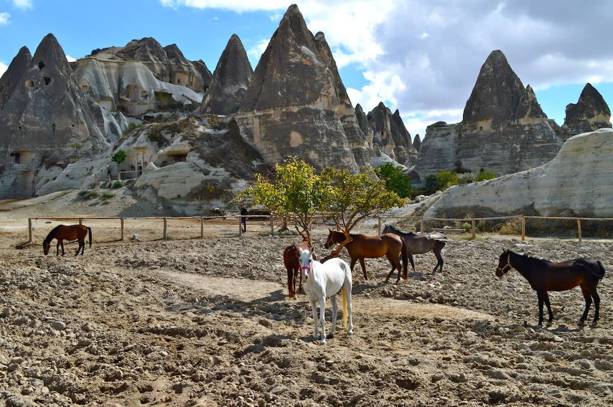 Cappadocia land of beautiful horses