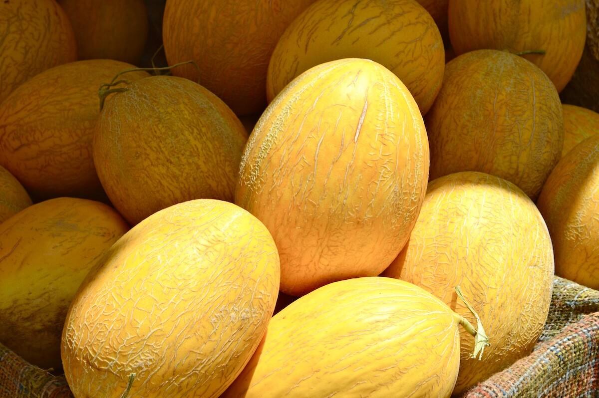Fresh Melons at Morocco