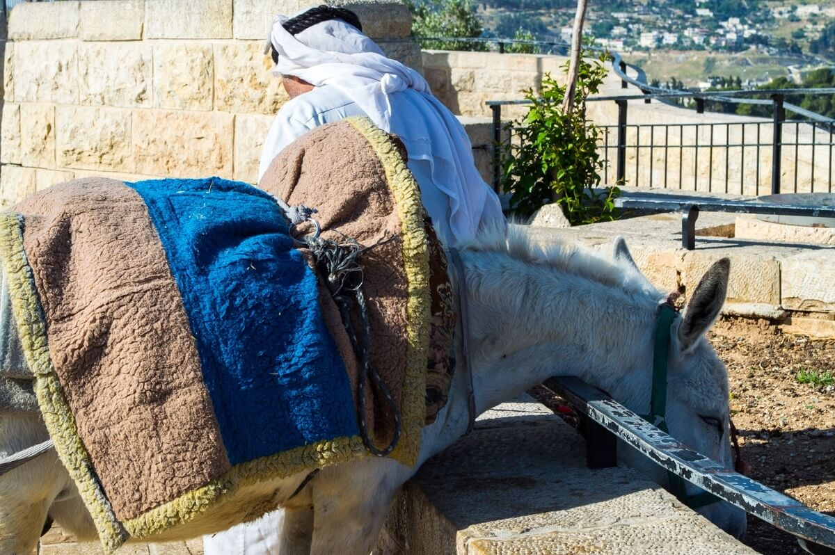Palestinian man and his donkey at Jerusalem