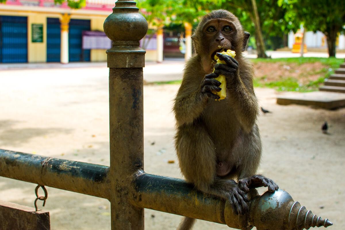 Monkey feeding time yo